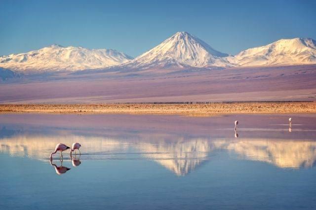 Flamencos en el Salar de Atacama Chile