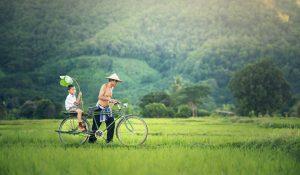 Disfrutar de los verdes campos de Myanmar