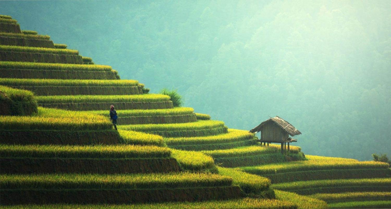 terrazas de arroz en sapa