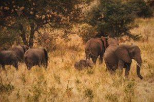 Elefantes en el Meru National Park