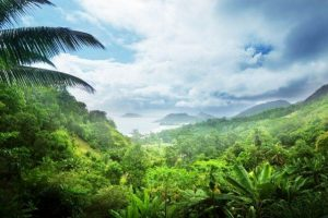Jungla en Seychelles