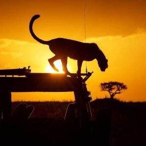 KENIA SAFARI grandes viajes de sofia