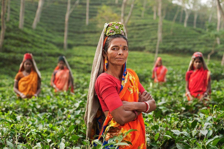mujeres indias en un campo de té