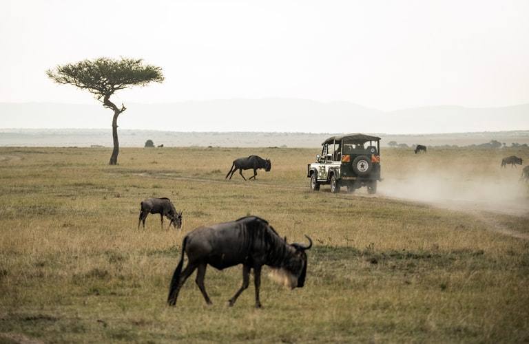 Vehículo 4x4 en un safari rodeado de nús