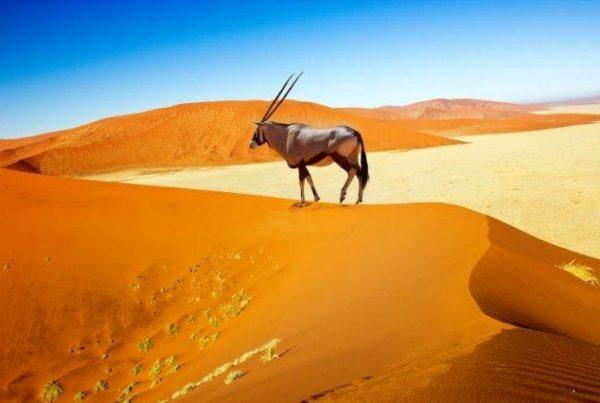 ¿Cuál es la mejor época para viajar a Namibia?