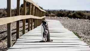 pingüino en