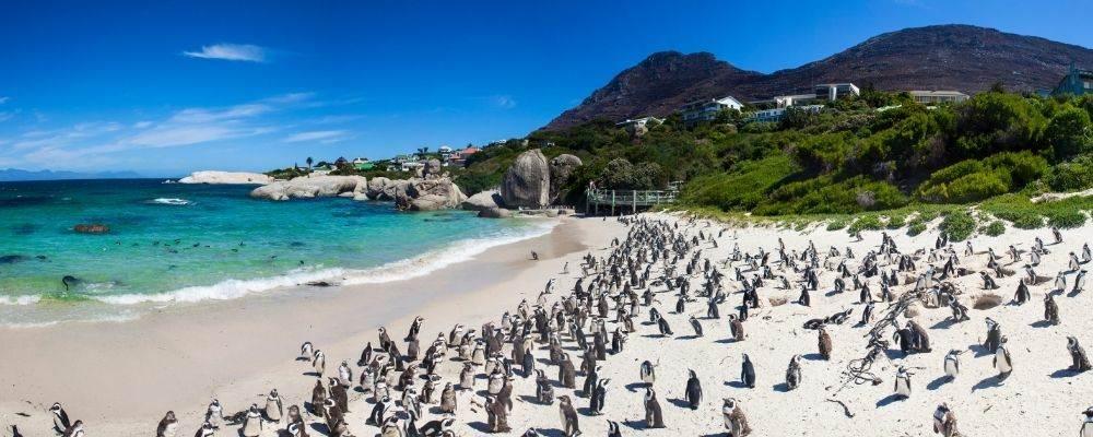 10 actividades en Sudáfrica para un viaje de ensueño