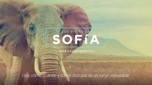 Banner Sofía