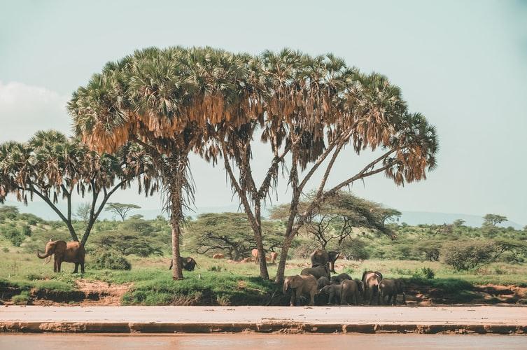 Manada de elefantes junto a un lago en Kenia