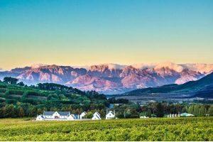 Viñedos de Stellenbosch
