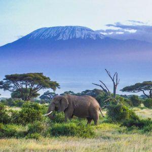 Elefante en el Kilimanjaro