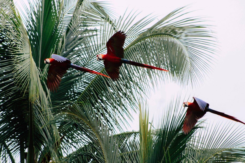 Cuál es la mejor época para viajar a Costa Rica: consejos y recomendaciones