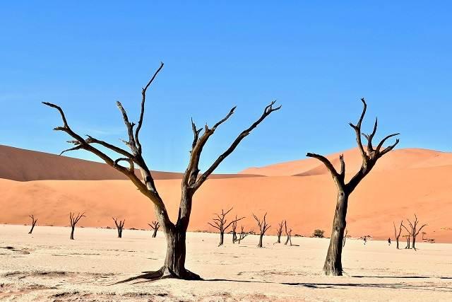 árboles petrificados
