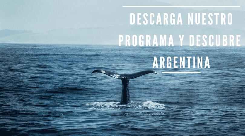 Cola de una ballena en Puerto Madryn