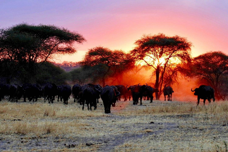 Atardecer en un safari de lujo