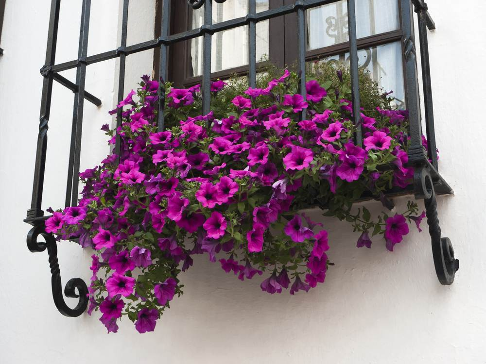 «Hoteles con Encanto» en Andalucía