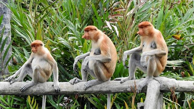 Una visita al Parque Nacional de Tanjung Puting, Indonesia