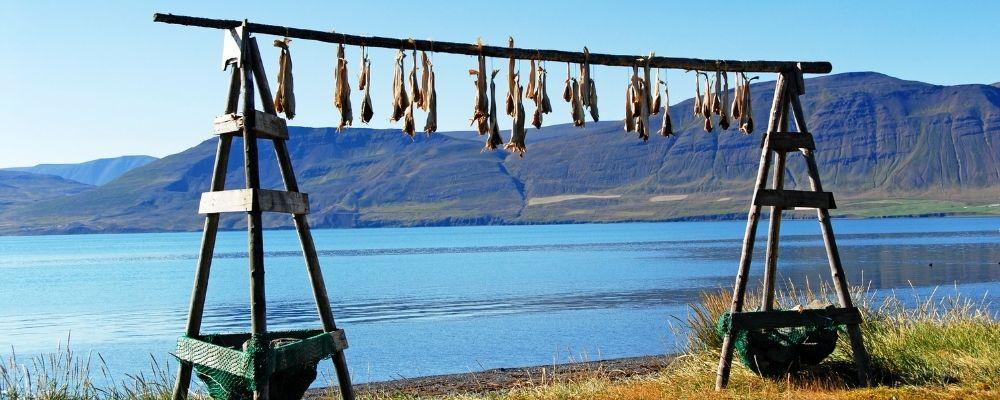 Comer en Islandia