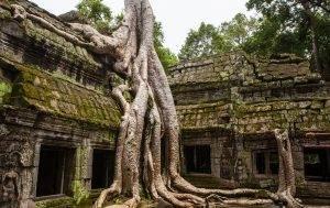 Raíces de un árbol sobre las ruinas de Angkor Wat