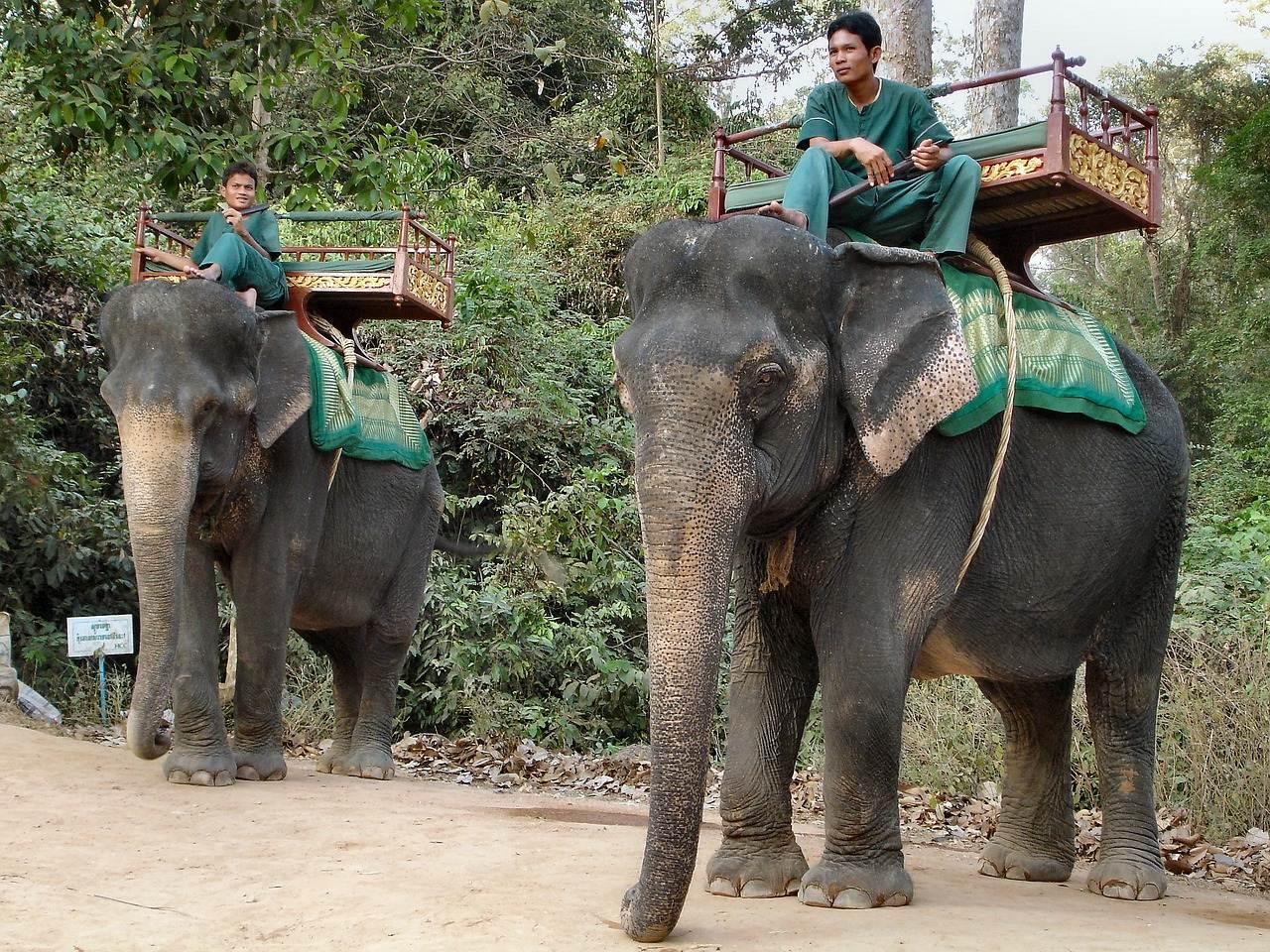 Elefante de Camboya con conductor, llevan unas túnicas verdes