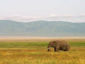 Elefante en la sabana