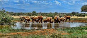 Elefantes en una charca