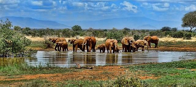 Elefantes en un safari de lujo
