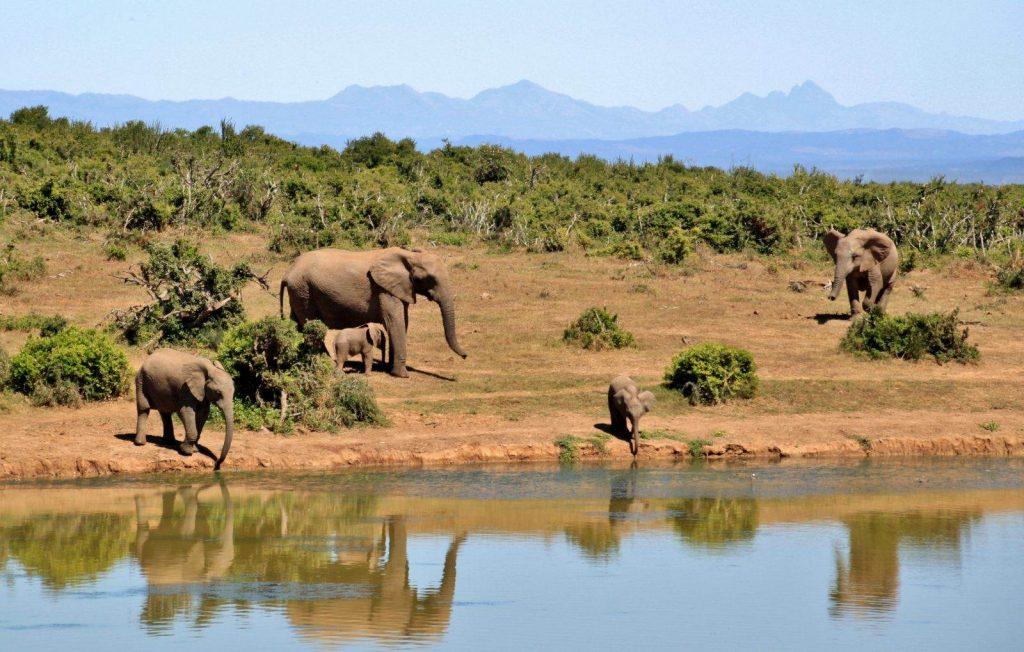 elefantes-safari-lujo