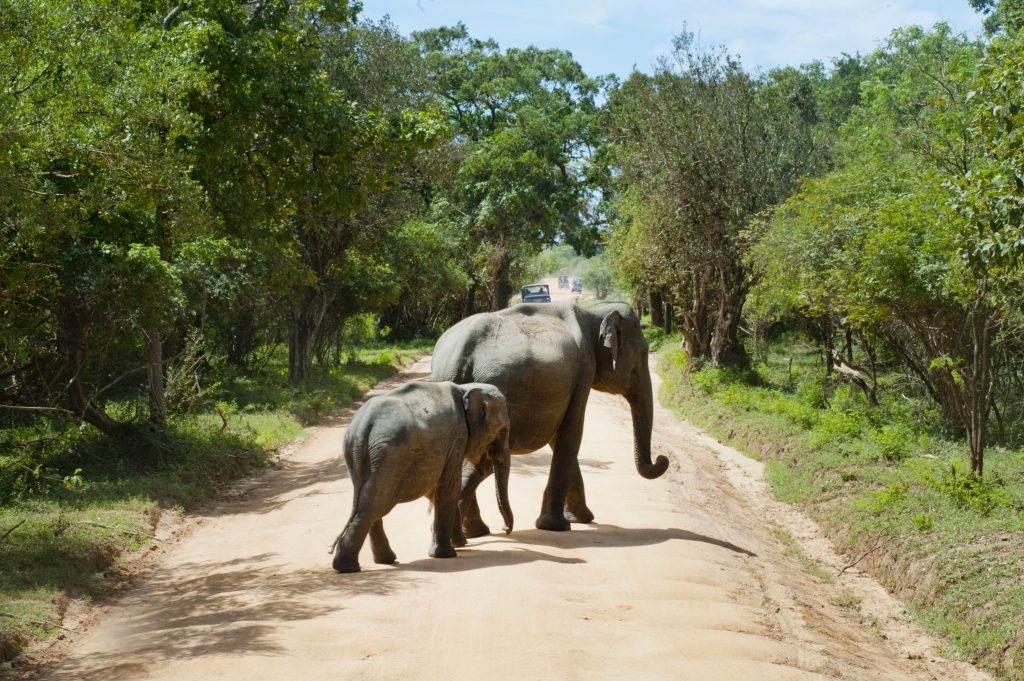 elefantes paseando por sudáfrica