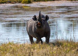 rinoceronte negro en Etosha National Park