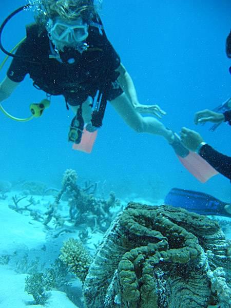 buzos en la gran barrera de coral