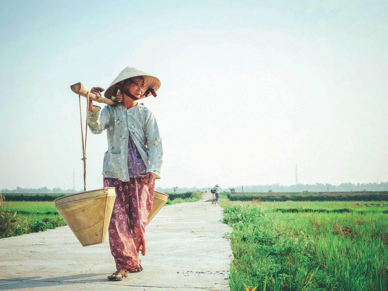 mujer vietnamita cargando arroz en los arrozales