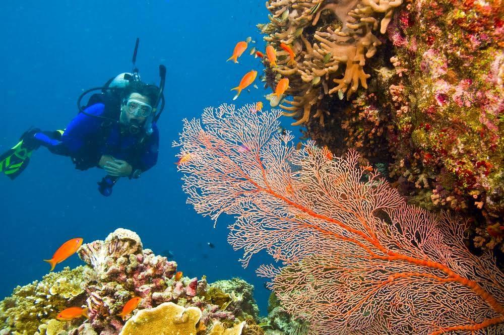 hacer snorkel barrera de coral