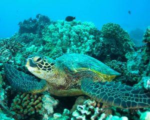 Tortuga en un arrecife de coral en Nosy Be