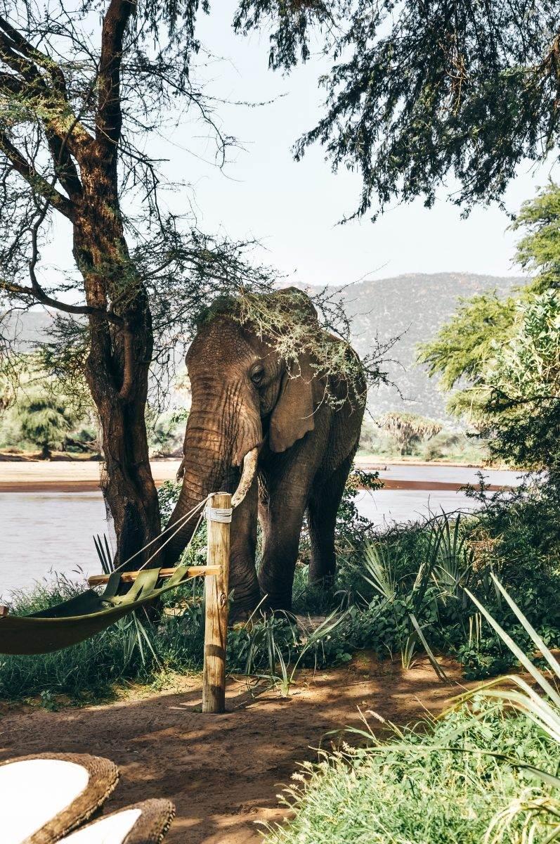 Safari en Kenia en 10 días