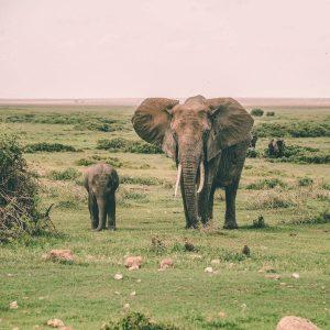 Elefante con su cría en la sabana africana