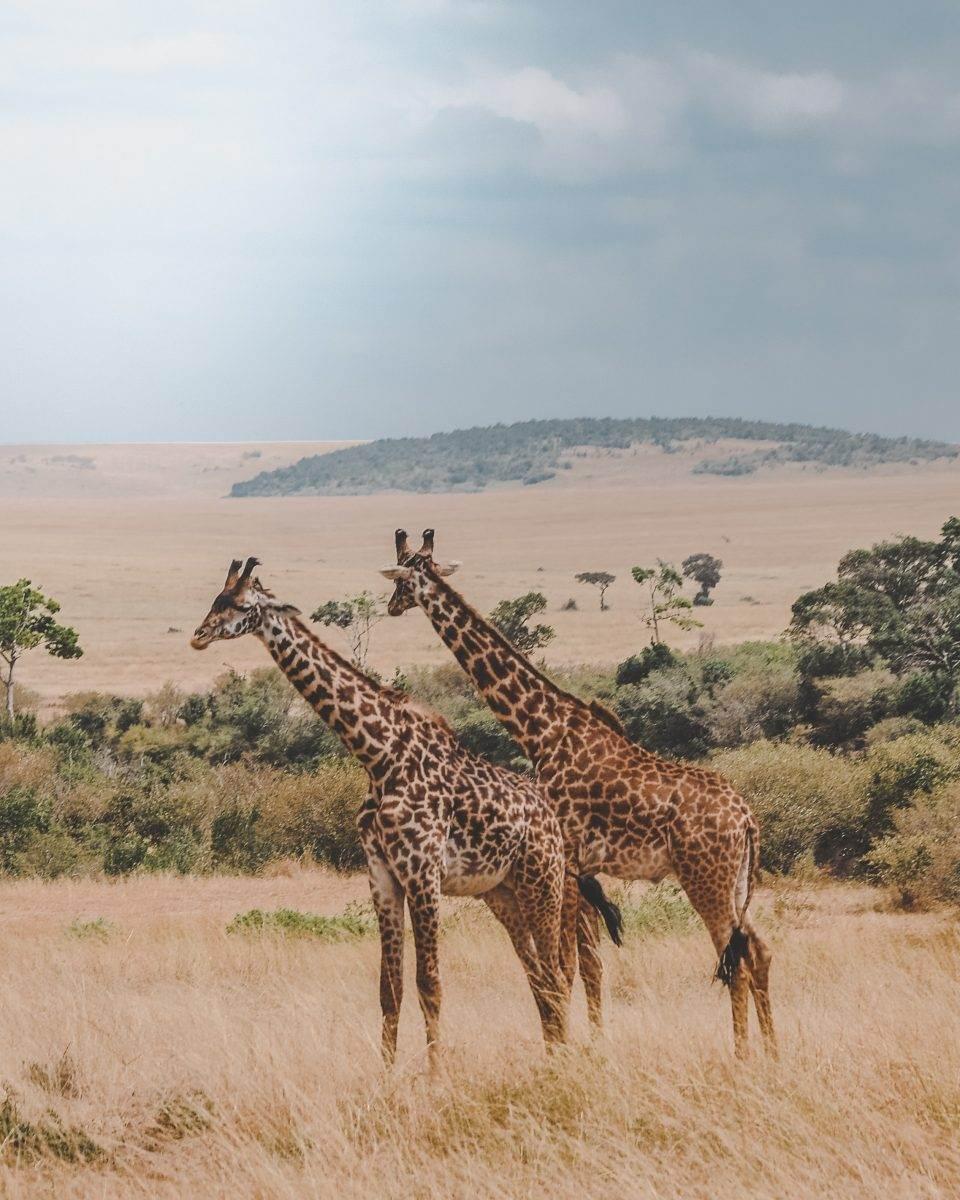 Precio de viaje a Kenia, ¿cuánto cuesta un safari?