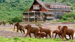 Hotel con elefantes en Kenia