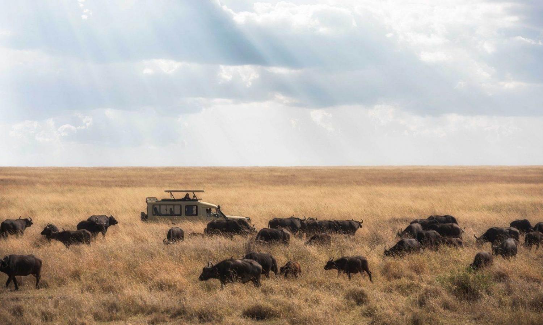 vehículo haciendo un safari por la sabana