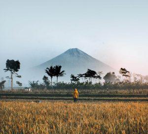 Plantaciones frente al volcán Bromo