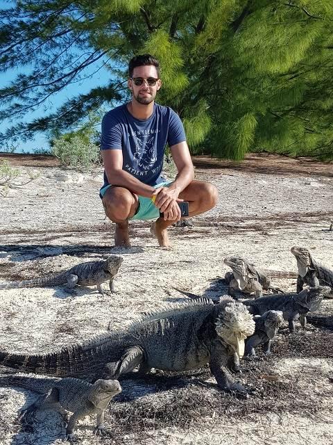 Iguanas en Cuba
