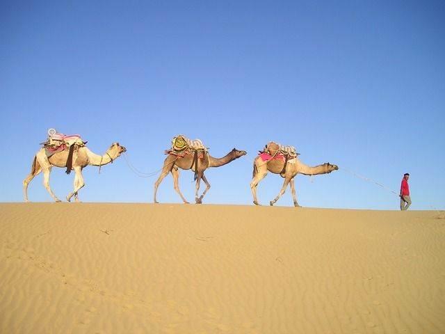 camellos paseando por el desierto
