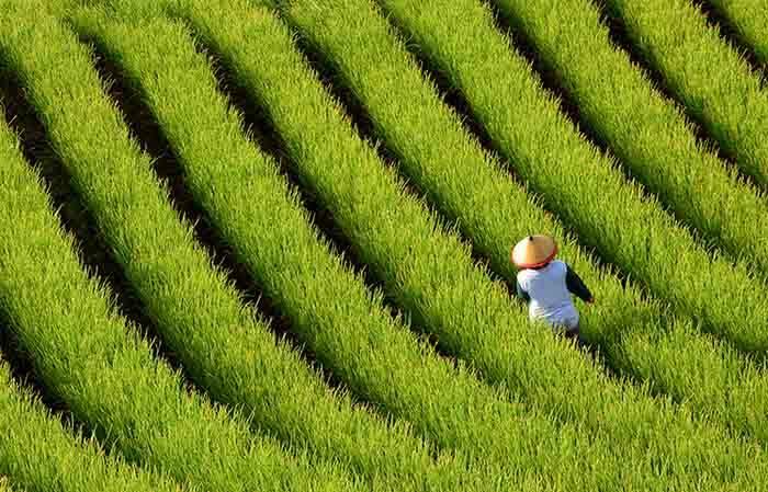 qué ver en 15 días en indonesia campo verde