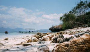 Corales y restos marinos en la orilla de una playa