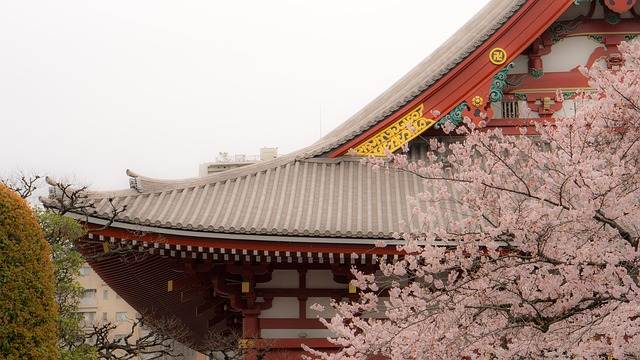 detalle de casa japonesa con cerezo
