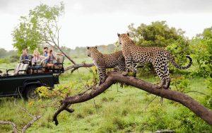safari de lujo