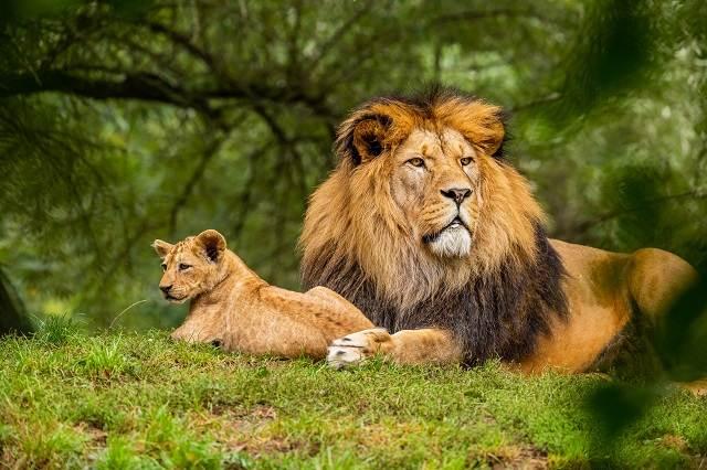 Zoológicos, naturaleza y animales a los que puedes visitar desde tu hogar