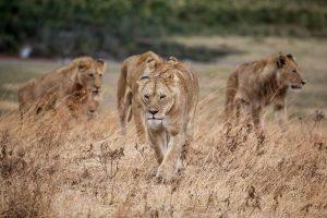 safari Kenia y Tanzania en 15 días
