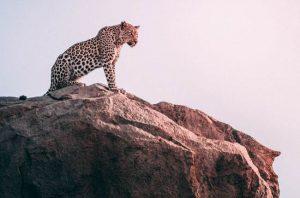 Un leopardo en un safari de lujo