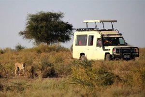 Leopardo en un safari por Tanzania